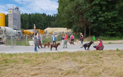 Gesunde Hunde – Hundegesundheitstag